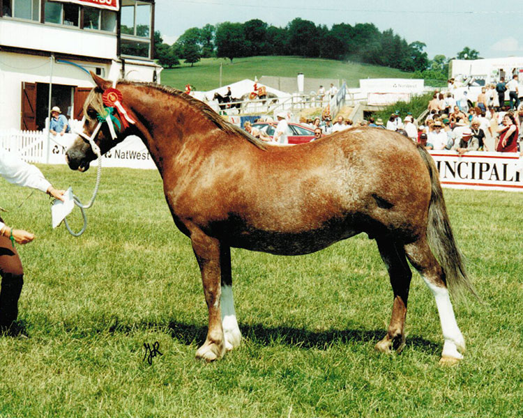 First prize winner in 1996. Dam of  Neuaddparc Welsh Anthem and  grand dam of  Neuaddparc The Mistress, all Royal Welsh winners.
