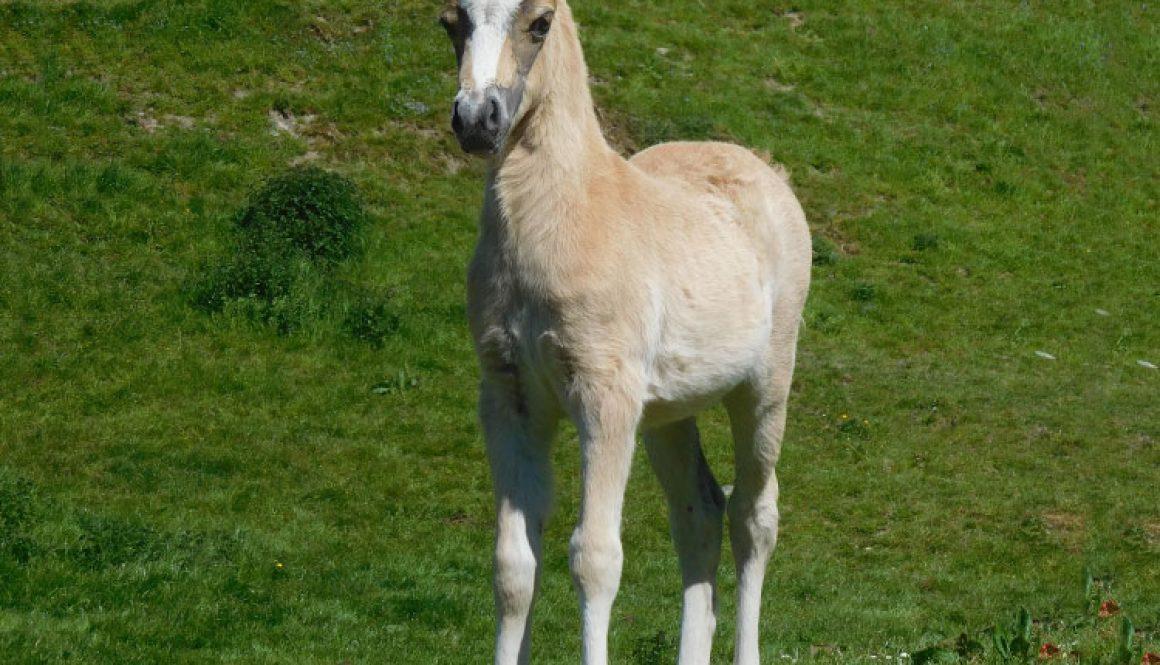 Armani-foal-by-James-Fox
