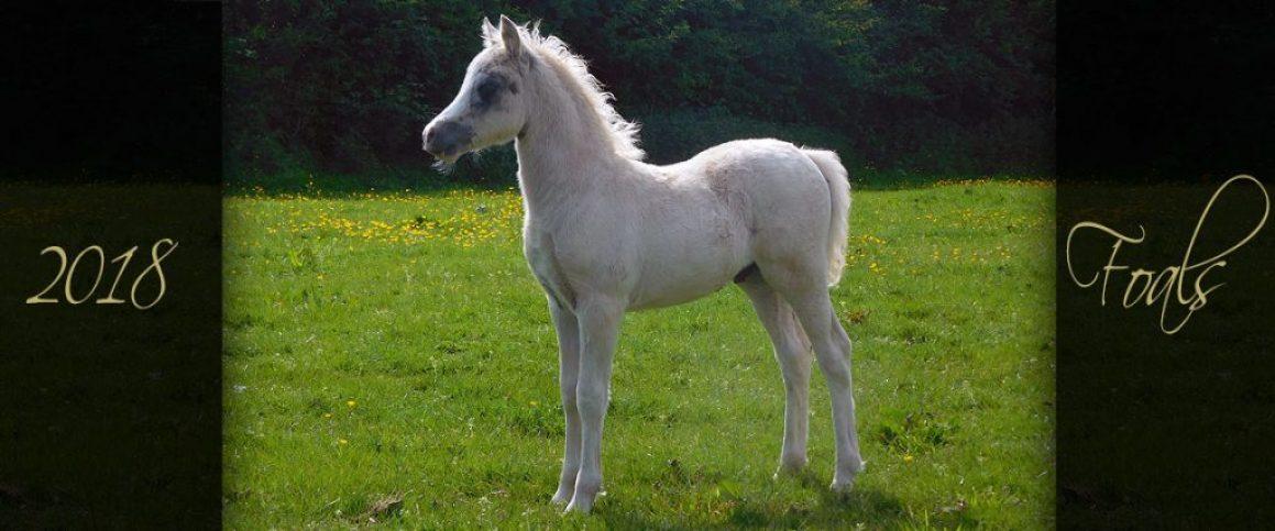 foals 2018 2