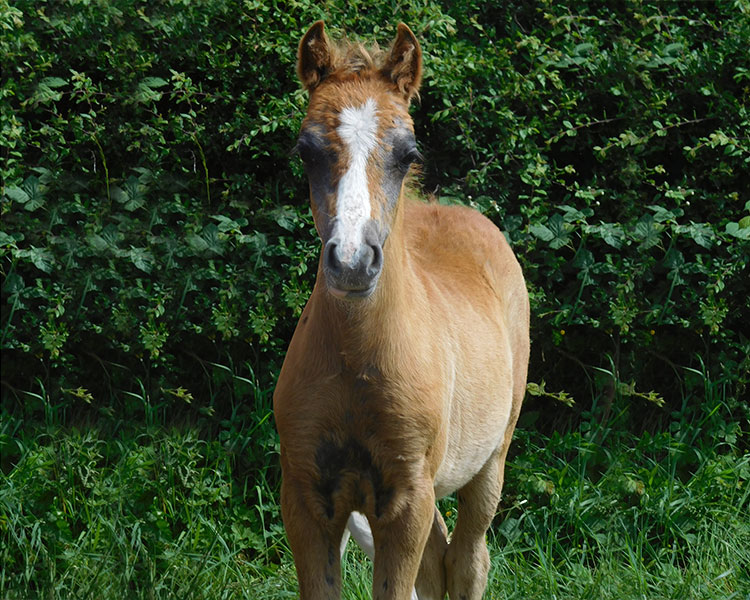 per lei filly 2017 6