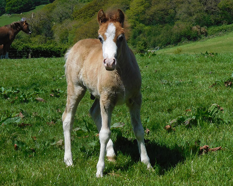 supernatural foal 2