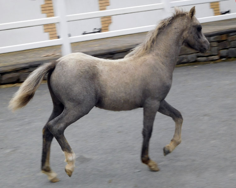 CHANEL-FILLY-11