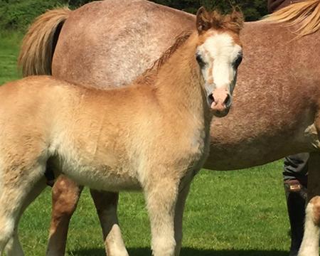 Swshi colt foal 2
