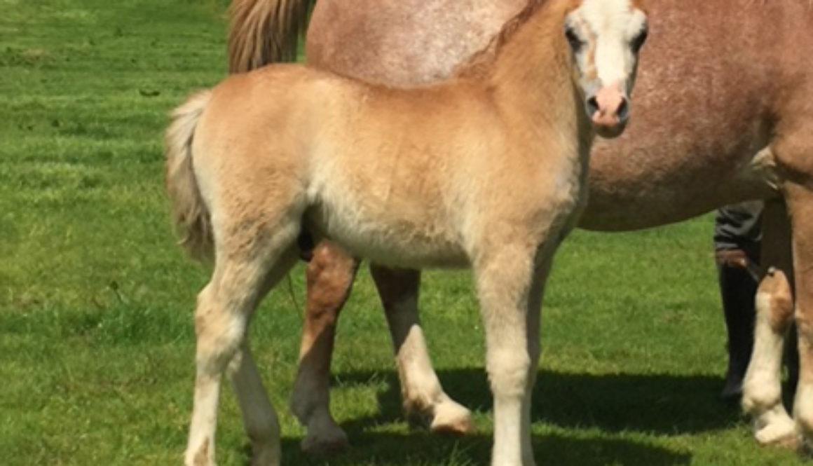 Swshi-colt-foal-3