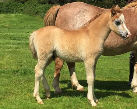 Swshi colt foal 4