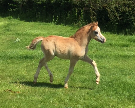 Swshi colt foal 6