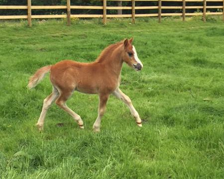 True love colt foal 2