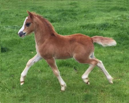 True-love-colt-foal
