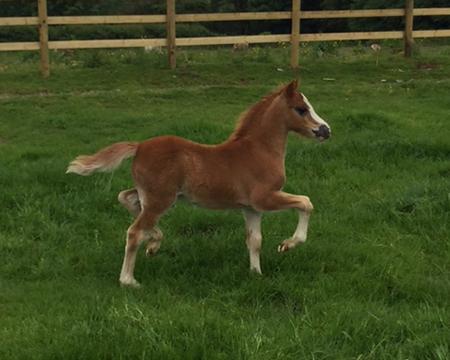 True love colt foal3