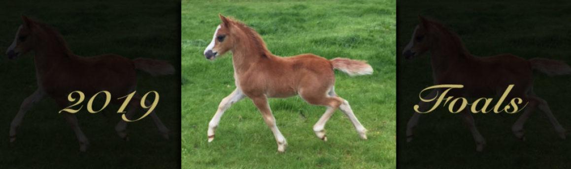 foals 2019