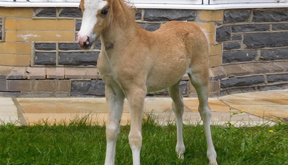 armani-foal-1