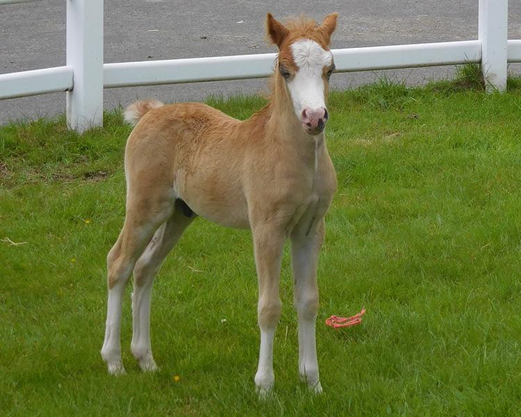 armani foal 2