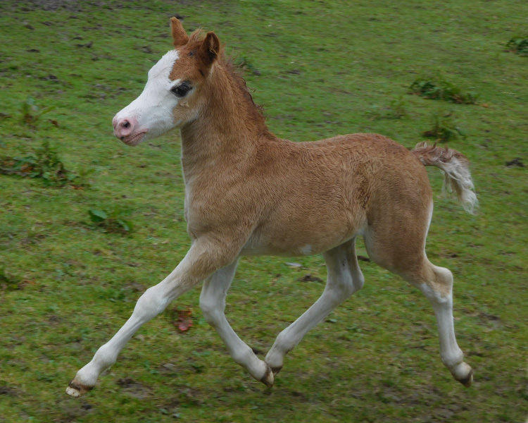 supernatural foal 1