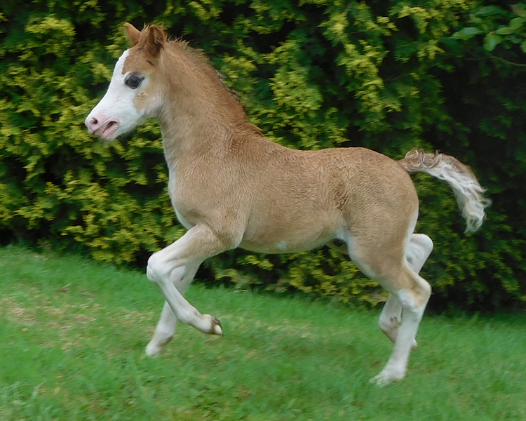 supernatural-foal-2