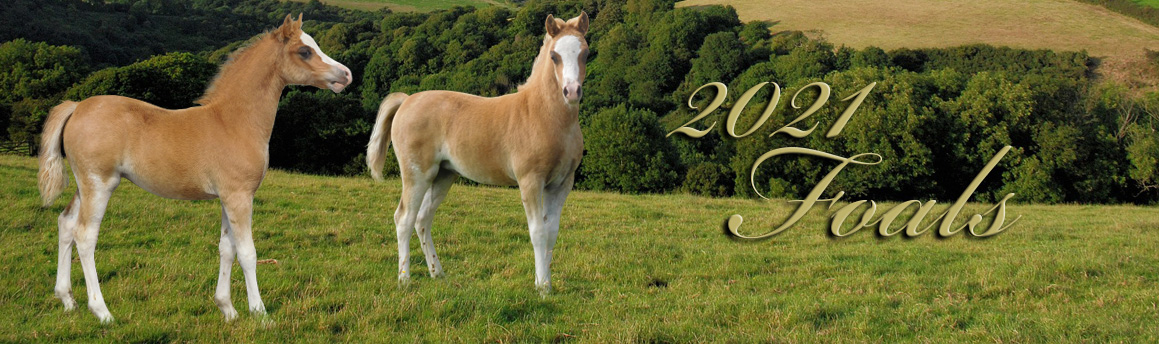 foals-2021
